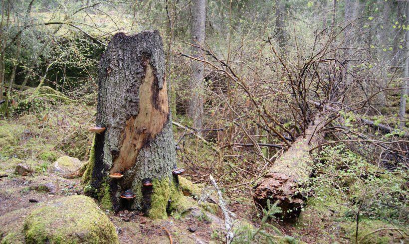 Skogskurs