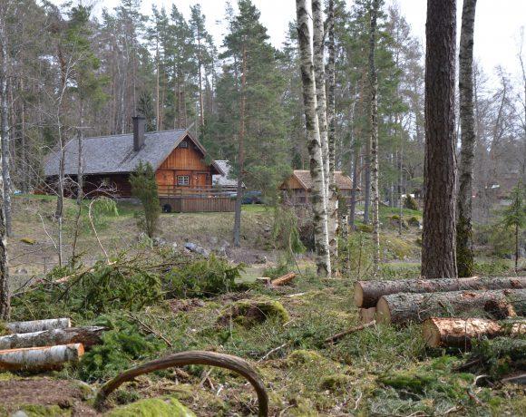 Skogsförvaltning